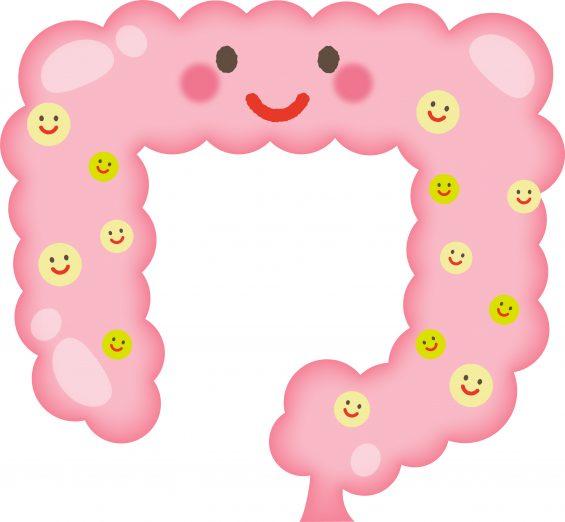 腸内細菌によって葉酸は作られる