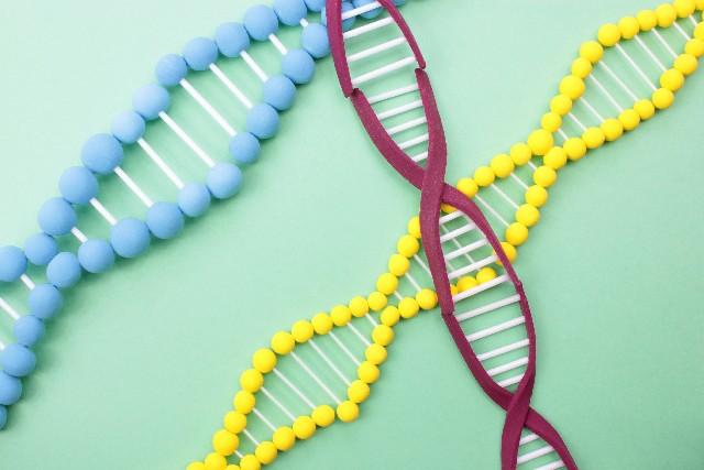 葉酸で染色体の異常(ダウン症)は予防できるのか