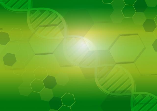 葉酸の役割!DNAの生成や合成など健康に生きていくためには葉酸が必要不可欠