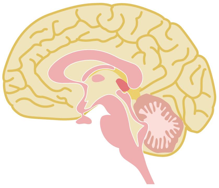 葉酸はドーパミンを合成するのに必要不可欠