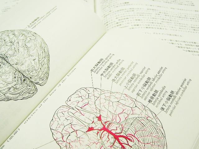 なぜ葉酸で脳卒中・認知症予防ができるのか